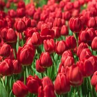 Flower/Garden Tours
